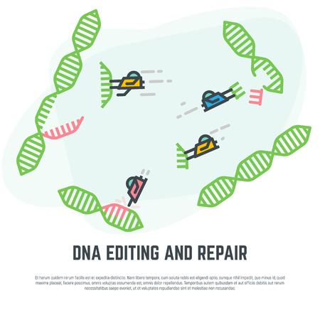 DNA editing technology. CRISPR/CAS9 manipulation with DNA broken genes. Line vector illustration. Nano bots repairing DNA concept. Illustration