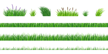 Horizontal seamless elements of green grass of different degree of germination. Strizhenaya and fresh vegetation. Bushes with flowers and reeds.