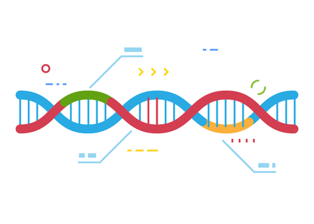 DNA molecule with regions with different colors. Crisp Cas 9 gene repairing technology. Genetic repair and infographic. Examination of human dna. Line style vector. Ilustração