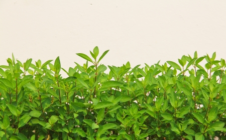 Green leaves  texture background  Stock Photo
