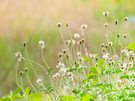 Beautiful littel flowers Stock Photo