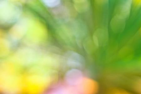 green bright bokhe background Stock Photo