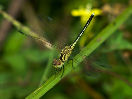 insect dragonfly macro nature background photo