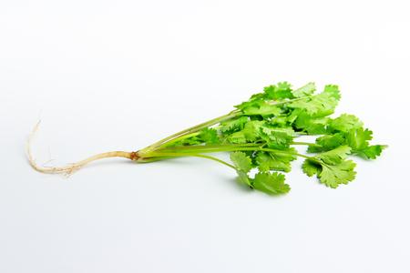 parsley: fresh parsley