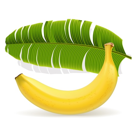 Ripe yellow banana with leaf Stock Vector - 17127130