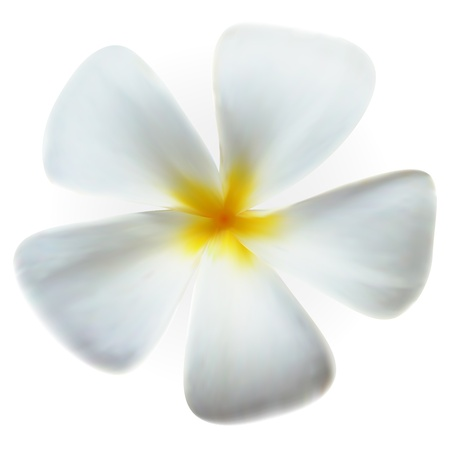 Frangipani plumeria Spa Flower isolated on white Stock Vector - 17142094