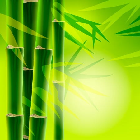 Bamboo background with copy space,image  Vector