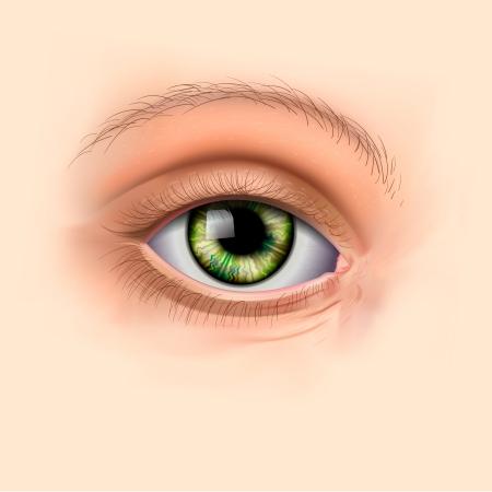 Woman green eye close up Vector