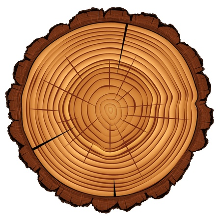 bark: Cross section of tree stump isolated on white