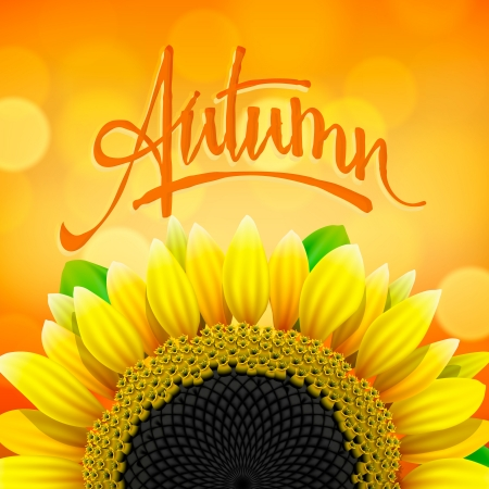 Autumn background with sunflower, vector Eps10 illustration. Vector