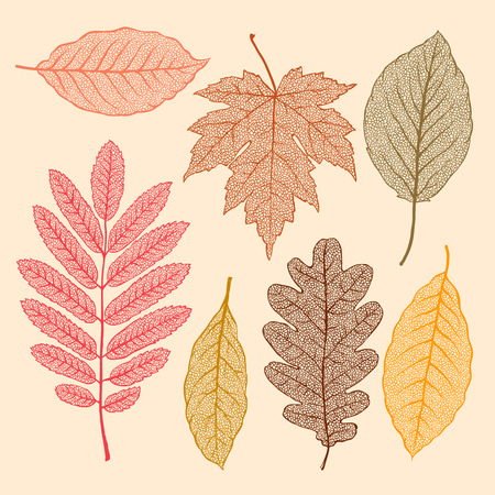 Autumn leaves, isolated dried leaves set