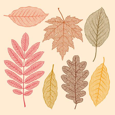 flores secas: Hojas de otoño, hojas secas aislado Conjunto Vectores