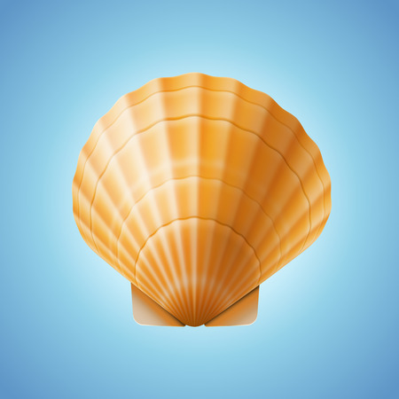 scallop: Realistic scallop seashell, isolated on blue background