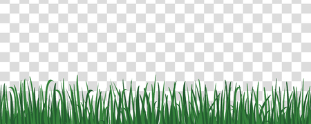 Isolated plant stems for front plan nature illustration. Grass background.Green grass meadow border vector pattern. Spring or summer plant field lawn.