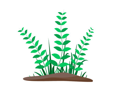 Flower Borders Set. Spring flowers growing in the garden. Flat vector illustration isolate on a white background. Иллюстрация