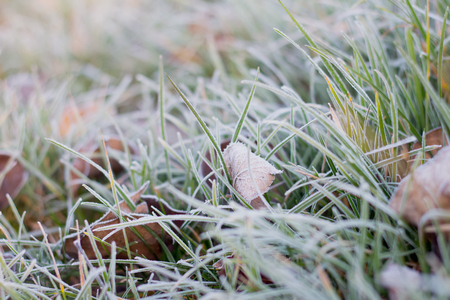 Frost icicles first frost frost on grass and leaves on the lawn late autumn cold frosty morning November