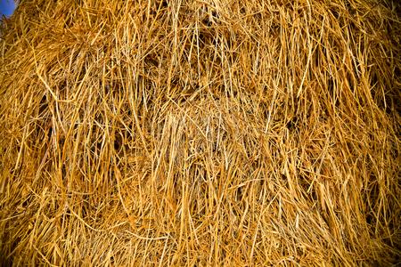 rick: rice straw rick Stock Photo