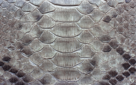 背景またはテクスチャとしてのヘビ革の断片。うろこ状のパイソンスキンクローズアップ。