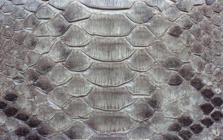 배경색 또는 질감으로 뱀 가죽의 조각. 비늘 Python 피부 근접 촬영입니다.