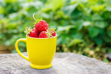 Yellow mug with ripe strawberry berries, standing on stump in garden, summer sunny day