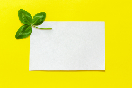 Natural clover leaf and white empty card for text on yellow background. St.Patrick 's Day concept. Top view. Mockup template
