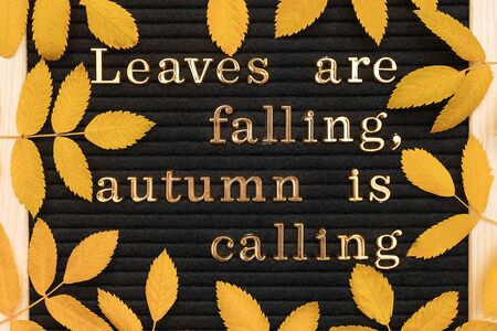 Leaves are falling, autumn is calling. Motivational quote on letter board and yellow autumn leaves, closeup. Top view Flat lay Copy space Concept inspirational quote of the day.