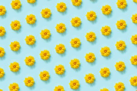 Flower pattern. Natural yellow flowers on blue background. Template for your design Top view Flat Lay. Standard-Bild