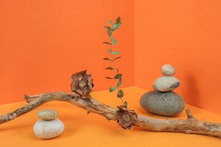 Layout made of from tree branch, dried flowers, eucalyptus and stones in corner space on orange background. Creative composition for your design. Front view. Standard-Bild