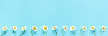 Banner made from row of white chamomiles daisies flowers on pastel blue color paper background. Copy space Template for text or your design Flat lay Top view Concept Hello summer.