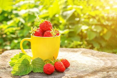 Red strawberry berries in yellow mug on stump in garden, summer sunny day. Copy space Front view. Standard-Bild