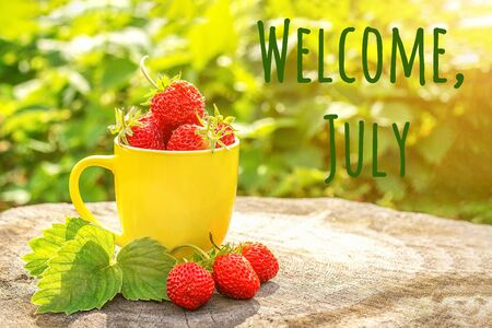 Welcome July text and red strawberry berries in yellow mug on stump in garden, summer sunny day. Front view.