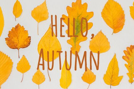 Hello Autumn text against of yellow autumn leaves herbarium on grey background. Top view Flat lay Greeting card Invitation. Standard-Bild