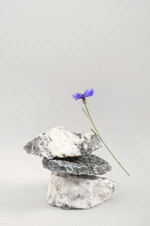 Creative podium for cosmetics or you merchandise, products. Layout made of from a pile of balancing stones and blue cornflower flower on grey background. Front view. Zdjęcie Seryjne