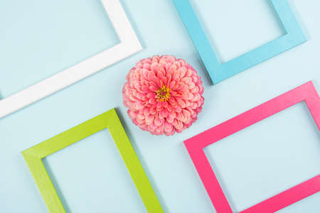 Creative layout made of one flower and bright colored frames. Flat lay Top view Copy space.
