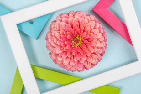 Creative composition made of one flower and bright colored frames. Flat lay Top view. 免版税图像