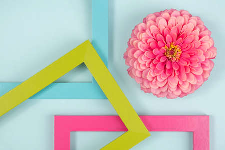 Creative composition made of one flower and bright colored frames. Flat lay Top view. Zdjęcie Seryjne
