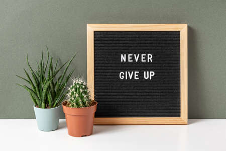 Never give up. Motivational quote on letter board, cactus, succulent flower on white table. Concept inspirational quote of the day. Front view.