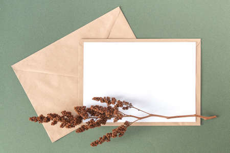 White blank card, craft envelope and dry flowers plant on green background. Top view Flat lay Mockup Copy space. Stock fotó - 162392564