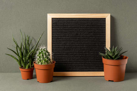 Blank letter board for your motivational quote, text and cactus succulent flower on green background. Front view, Mockup.