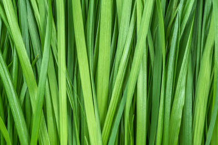 Green grass as background or texture, close-up. Stock fotó