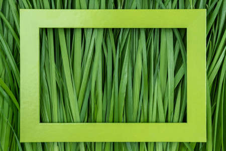Green frame on grass background, texture, close-up.