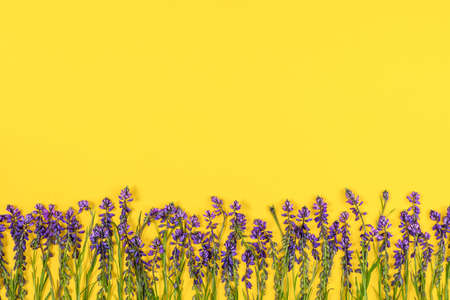 Border made with purple flowers on yellow background. Concept Spring or Summer backdrop. Template for design, greeting card, invitation, postcard Flat Lay Top view Copy space.