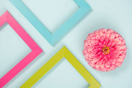Creative composition made of one flower and bright colored frames. Flat lay Top view. Stock fotó