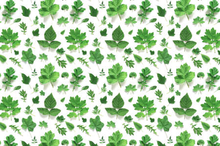 Pattern of various natural green leaves on a white background, as a backdrop or texture. Spring, summer wallpaper for your design. Top view Flat lay. Stock fotó