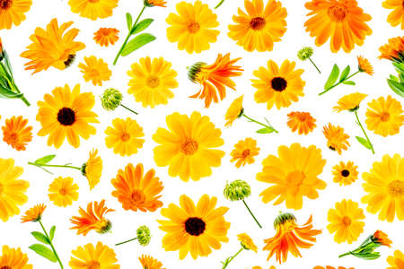 Seamless natural pattern of orange flowers of calendula on a white background, as a backdrop or texture. Spring, summer wallpaper for your design. Top view Flat lay.