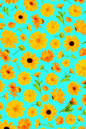 Pattern of orange flowers of calendula on a blue background, as a backdrop or texture. Spring, summer wallpaper for your design. Top view Flat lay.