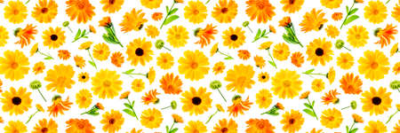 Pattern of orange flowers of calendula on a white background, as a backdrop or texture. Spring, summer wallpaper for your design. Top view Flat lay Banner.