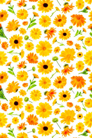 Pattern of orange flowers of calendula on a white background, as a backdrop or texture. Spring, summer wallpaper for your design. Top view Flat lay.