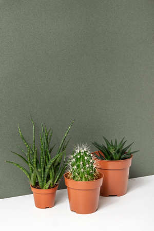 Home plants. Succulents and cactus in brown pots on table, green background. Close-up, Front view.