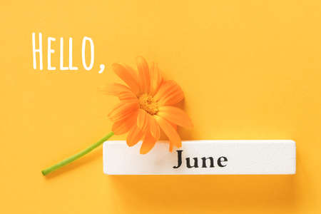 Hello June text, greeting card. One orange calendula flower and calendar summer month June on yellow background. Top view Copy space Flat lay Minimal style.